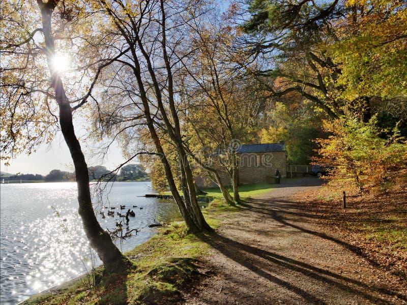 Arbres chez Talkin le Tarn un jour d'automne. photo stock