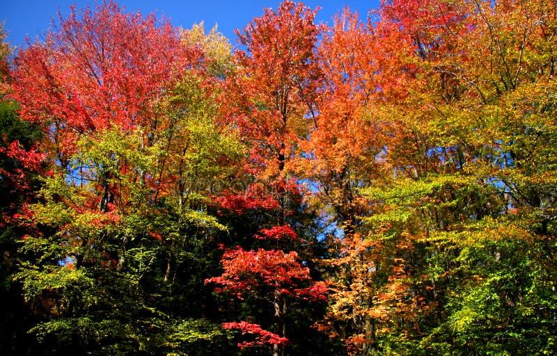 Arbres colorés d'automne photo stock