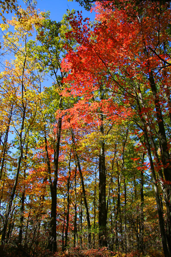 Arbres colorés d'automne photo libre de droits
