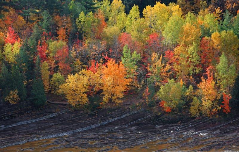 Arbres colorés d'automne par la colline de pied image stock