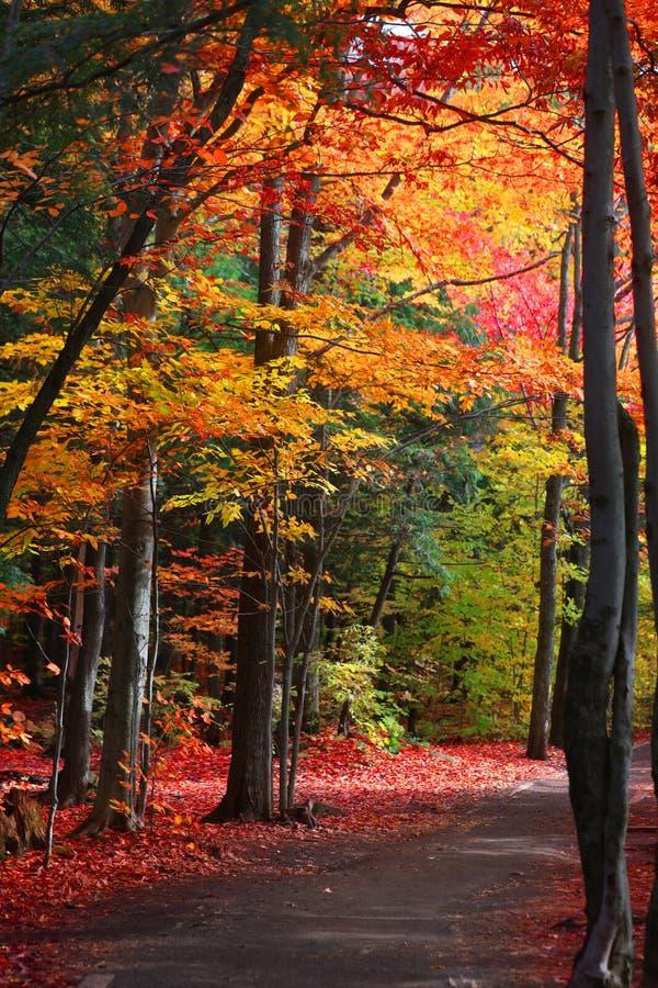 Arbres colorés d'automne par la traînée photographie stock libre de droits