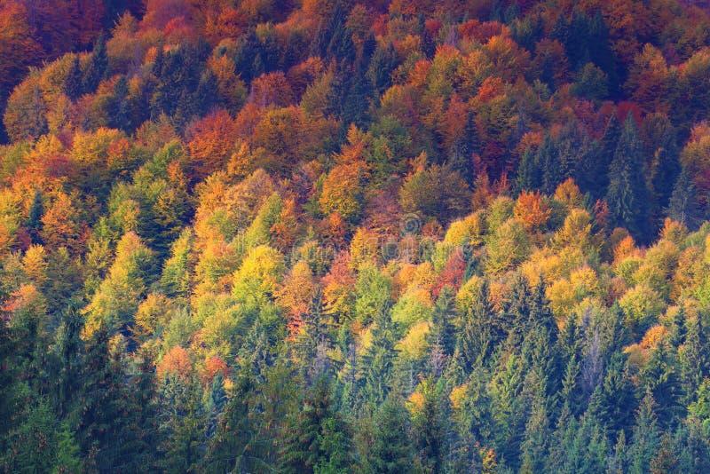 Arbres colorés d'automne sur la colline photos stock