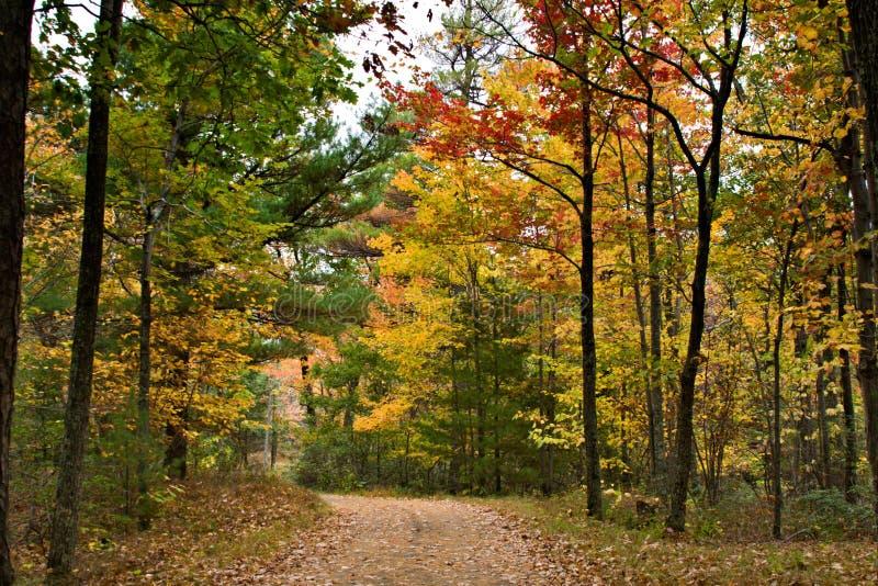 Arbres colorés en automne image stock