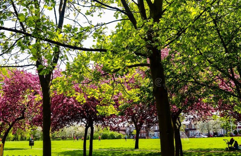 Arbres colorés en parc où les gens jouant à l'arrière-plan images stock