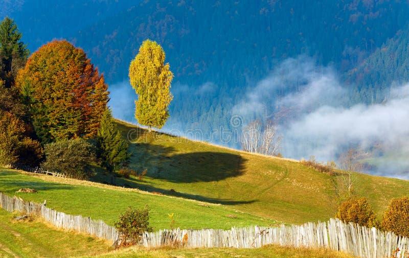 Arbres colorés sur la montagne images libres de droits