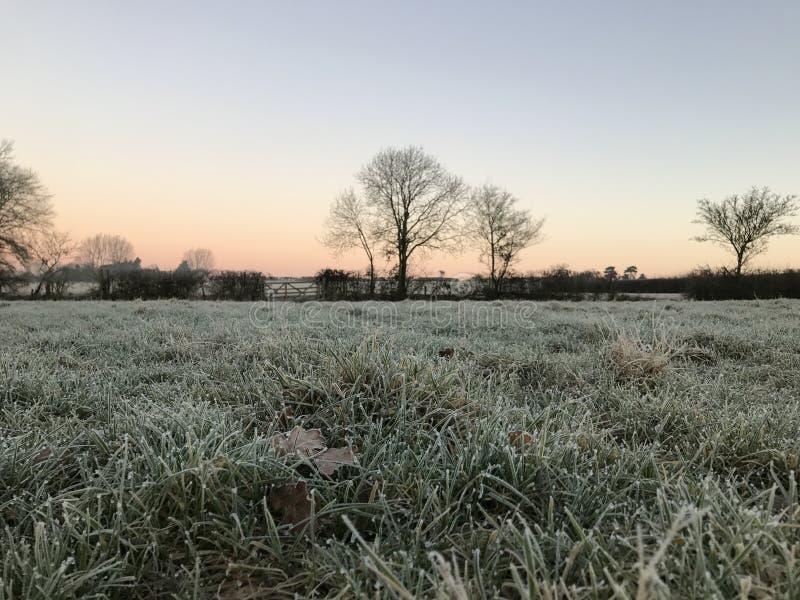 Arbres congelés de paysage de pays images stock