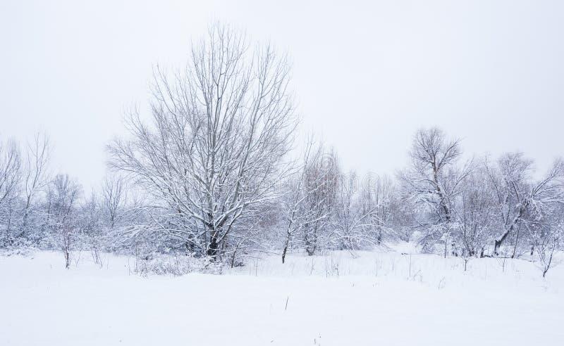 Arbres congelés en parc ou forêt avec la gelée de neige et de glace le jour brumeux froid d'hiver dans le crépuscule de nature photo stock