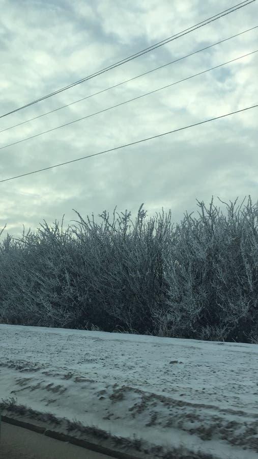 Arbres congelés givrés photos stock