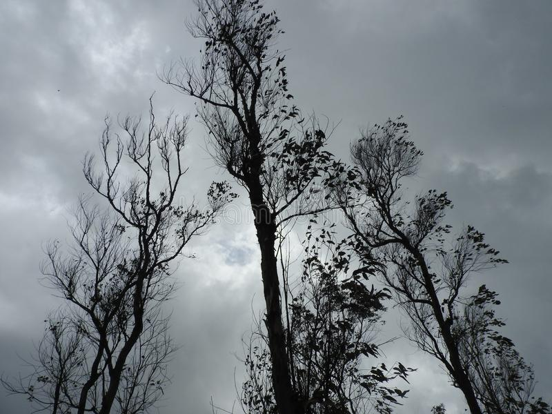 Arbres contre le ciel photo stock