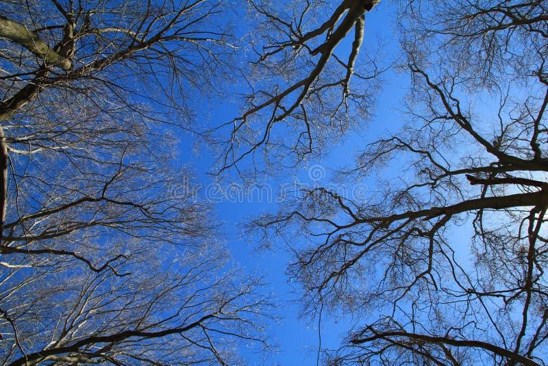 Arbres contre le ciel image libre de droits