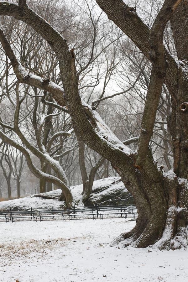 arbres couverts centraux de neige de stationnement de pelouse photographie stock libre de droits