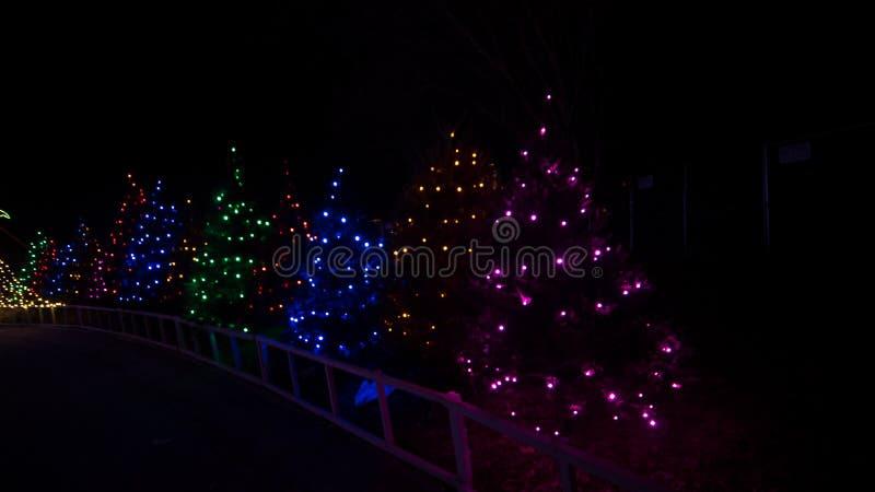 Arbres couverts dans l'éclairage orienté de vacances colorées de Noël en tant qu'élément d'un événement de festival images libres de droits