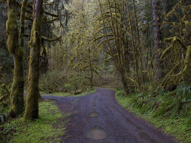 arbres couverts de l'Orégon de mousse photographie stock libre de droits