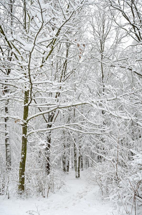 Chemin Dans Le Jardin Couvert D'arbres Photo stock - Image du ligne, path: 19983502