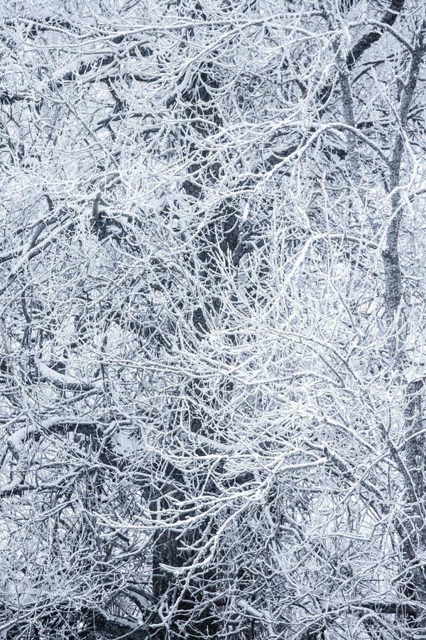 Download Arbres Couverts De Neige Dans Un Jour D'hiver Image stock - Image du course, europe: 87708013