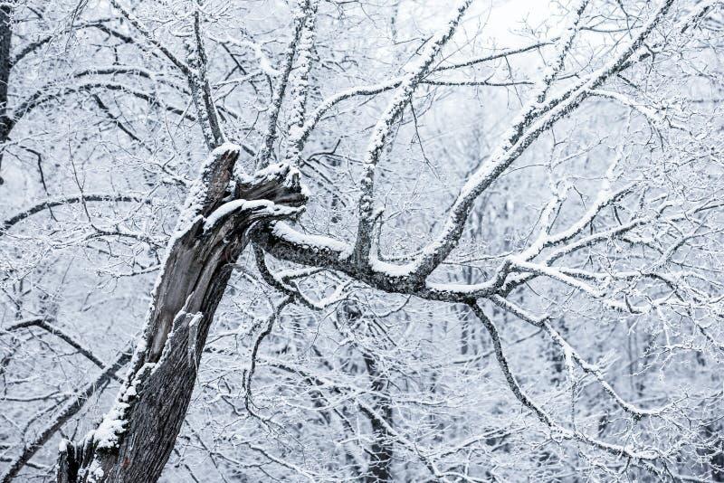Download Arbres Couverts De Neige Dans Un Jour D'hiver Photo stock - Image du congelé, fleuve: 87708014
