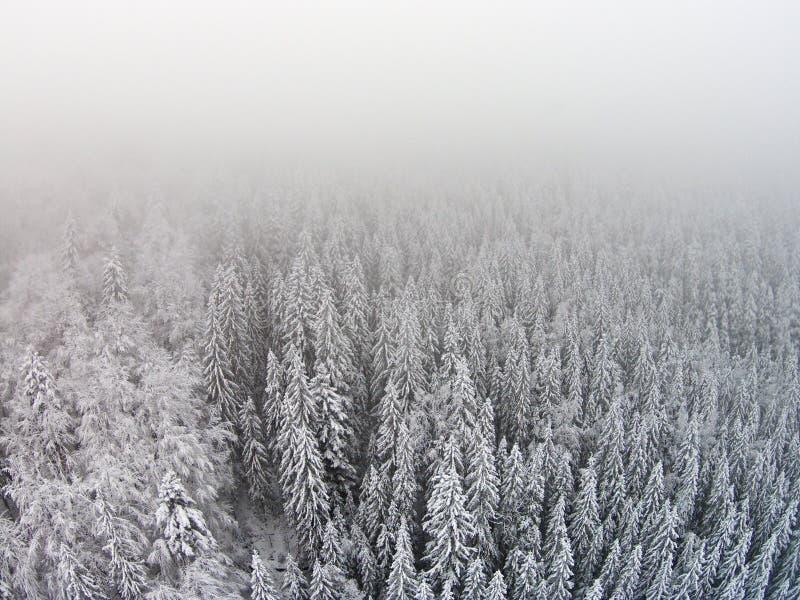 arbres couverts de neige dans une zone montagneuse pendant un brouillard photographie stock libre de droits