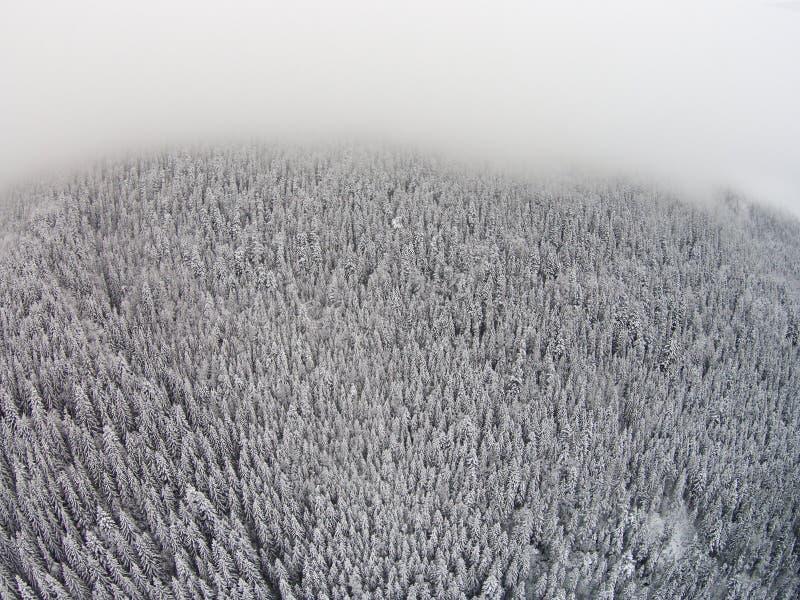 arbres couverts de neige dans une zone montagneuse pendant un brouillard photographie stock