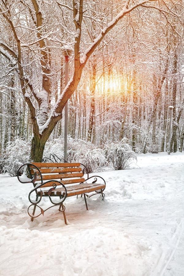 arbres couverts de neige en parc de ville photos stock