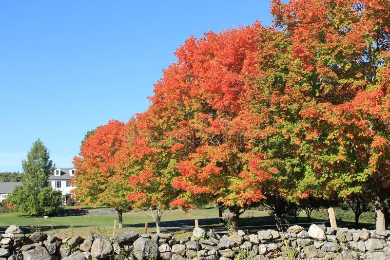 Arbres d'érable à la ferme à Harvard, le Massachusetts en octobre 2015 images stock