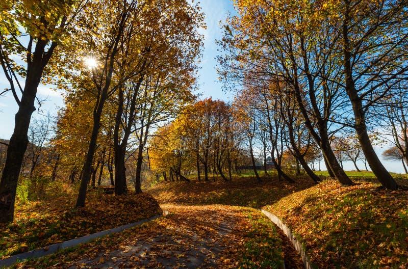 Arbres d'érable d'automne en stationnement images libres de droits