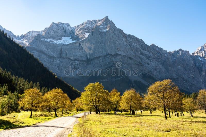 Arbres d'érable chez Ahornboden, montagnes de Karwendel, Tyrol, Autriche image stock