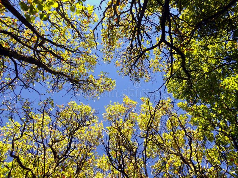 Arbres d'érable en automne le Connecticut image stock