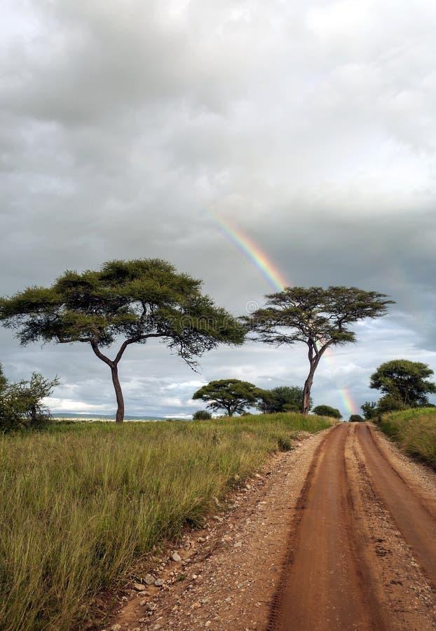 Arbres d'acacia avec l'arc-en-ciel photographie stock libre de droits