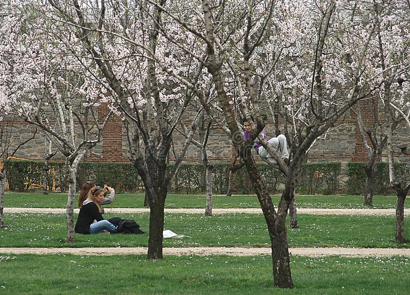 Arbres d'amande de personnes en fleur en parc de Retiro, Madrid photos libres de droits