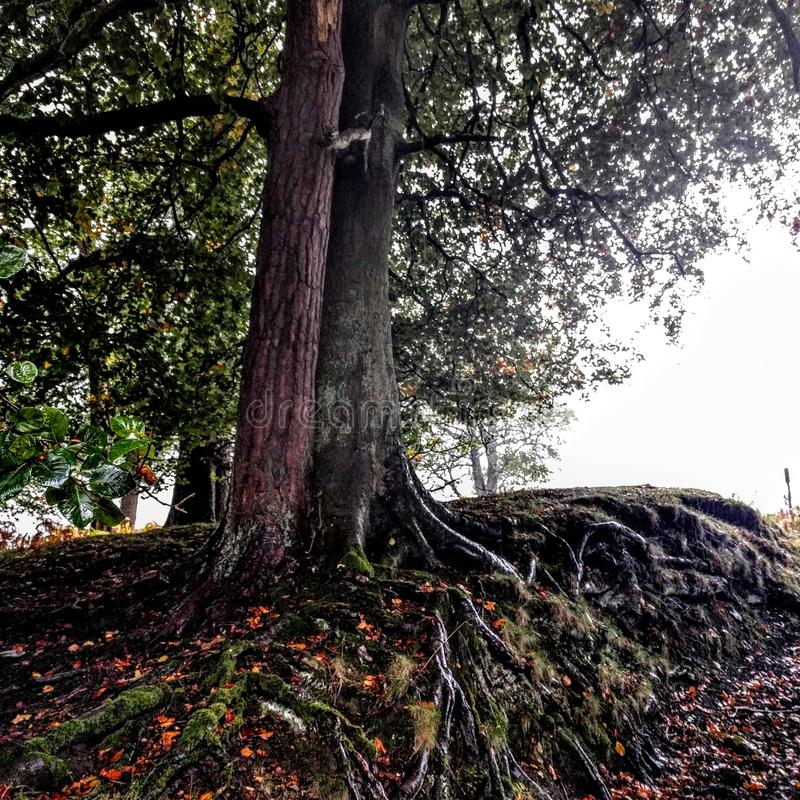 Arbres d'automne photos stock