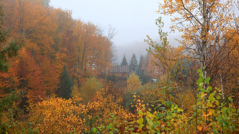 Arbres d'automne attrapés en brouillard photo libre de droits