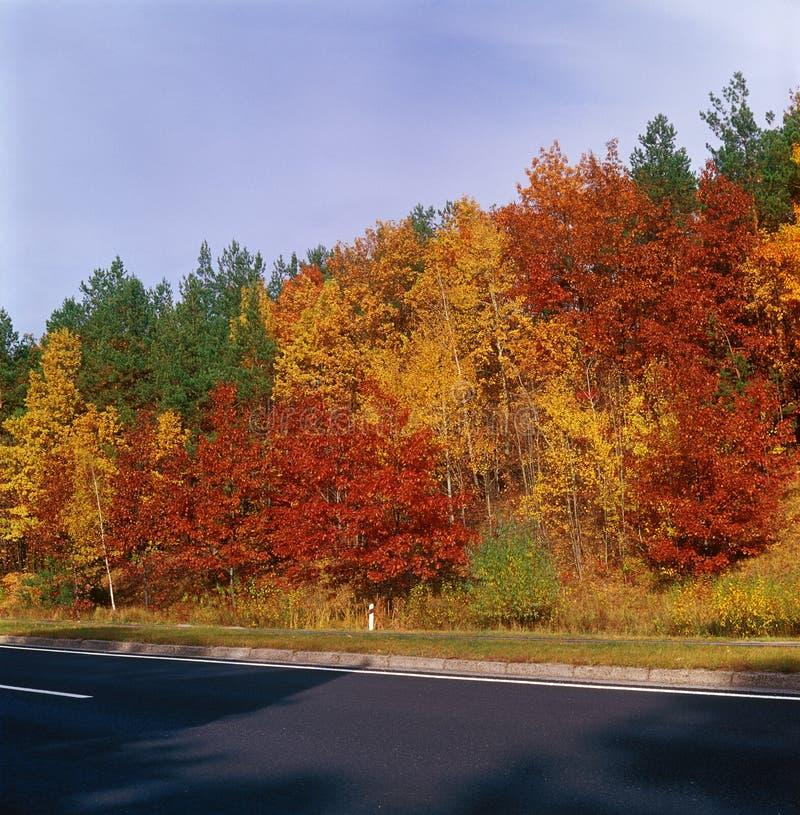 Arbres d'automne - centre. photographie stock