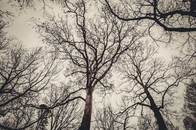 Arbres d'automne du Barré arrière-plan images stock