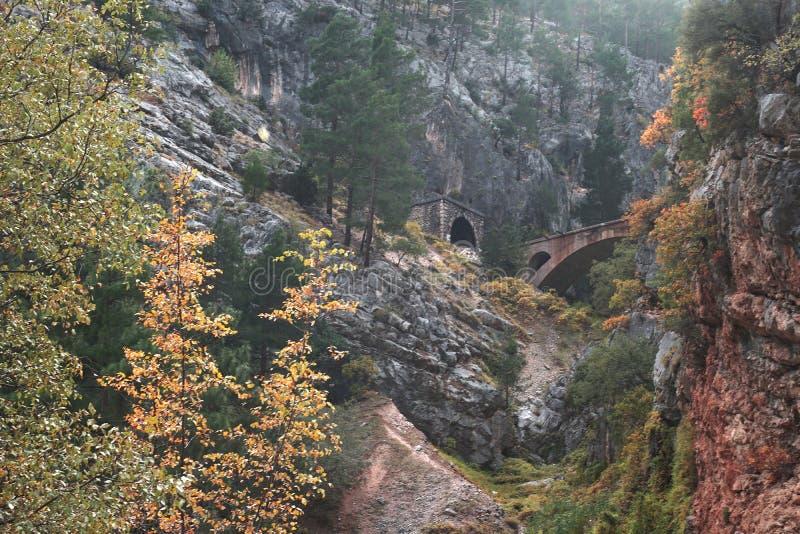 Arbres d'automne jaunes et feuilles vertes faisant de belles images en nature image stock