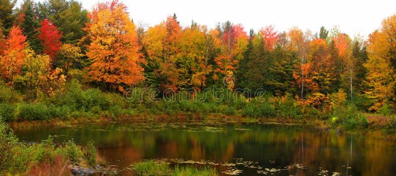 Arbres d'automne par l'étang photo stock