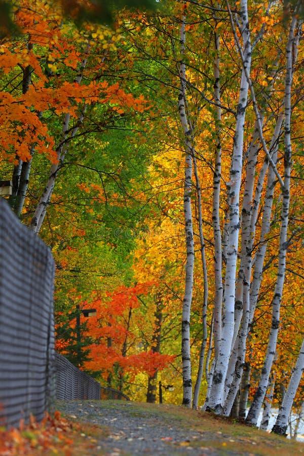Arbres d'automne par la traînée images stock