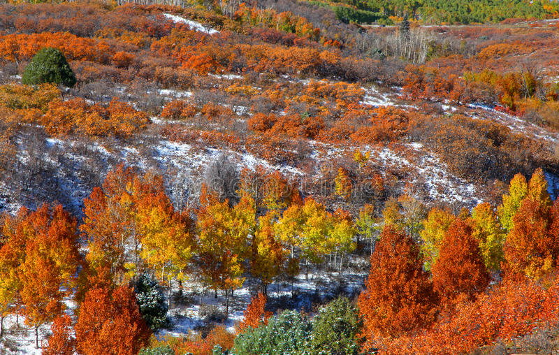 Arbres d'automne sur des reniflements de bâti images stock