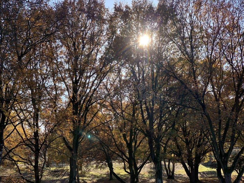 Arbres d'automne un jour ensoleill? photos libres de droits