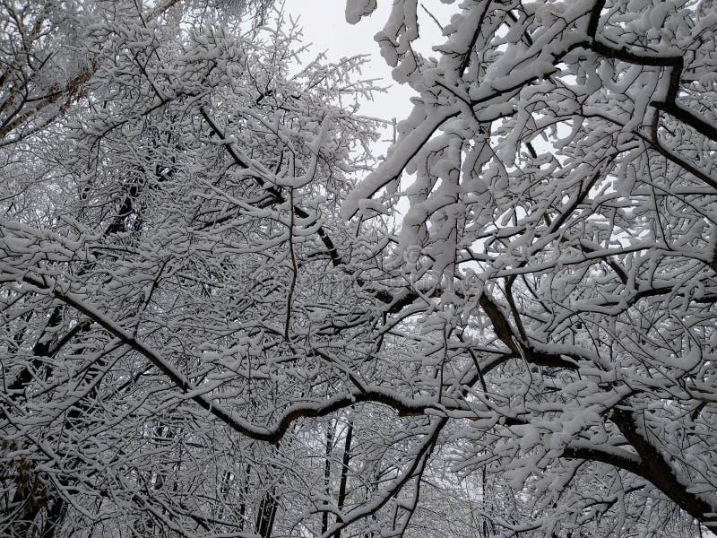 Arbres 1 d'hiver de Milou illustration de vecteur