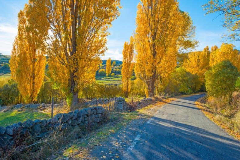 Arbres dans des couleurs jaunes d'automne photos stock