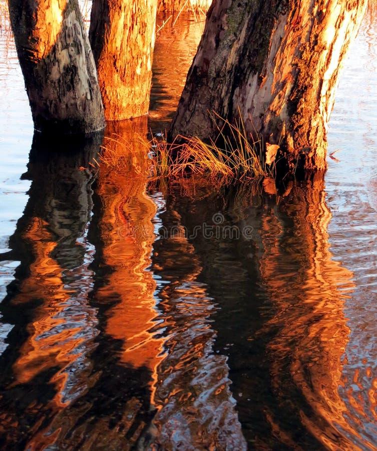 Arbres dans l'eau photo stock