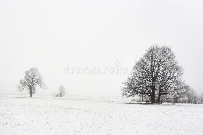 Arbres dans l'horizontal de l'hiver images libres de droits