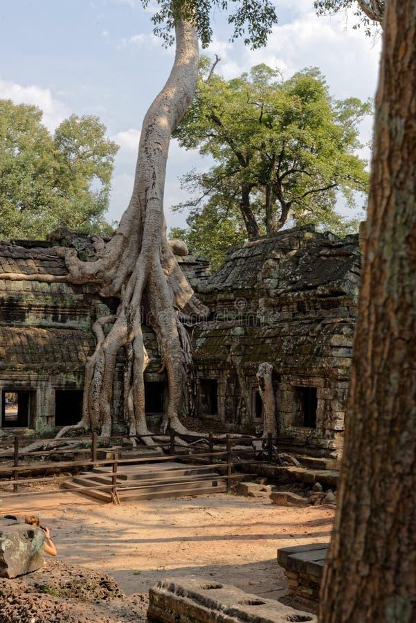 Arbres dans la cour, Angkor Wat Temple, Cambodge photos stock