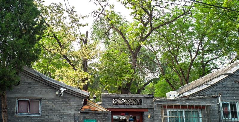Arbres dans la cour dans Hutong, Pékin image libre de droits