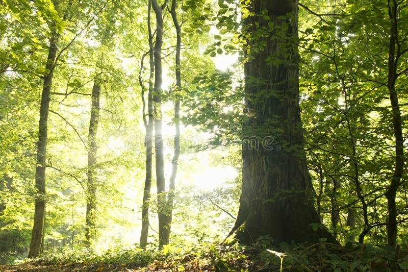 Arbres dans la forêt photographie stock