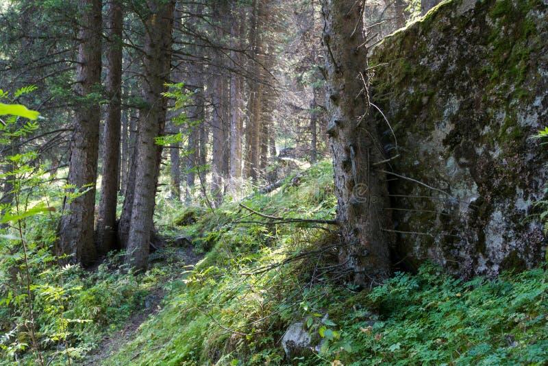 Download Arbres dans la forêt image stock. Image du scène, couleurs - 77150133