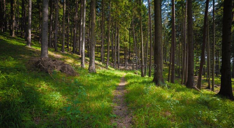 Arbres dans la forêt images stock