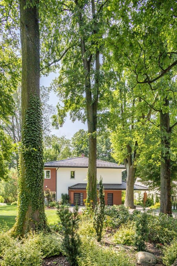 Arbres dans la forêt avec la flore et la maison avec le jardin photographie stock libre de droits