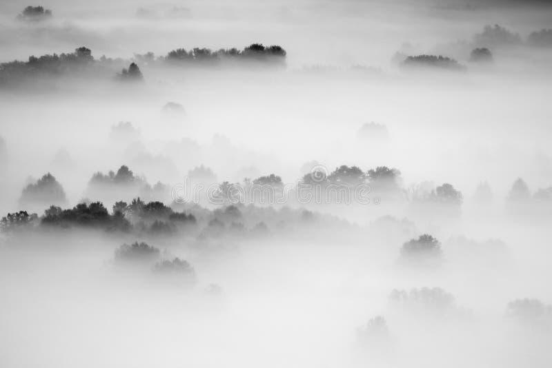 Arbres dans la photo noire et blanche de brouillard images libres de droits