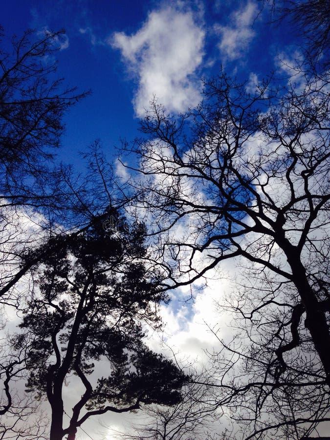 Arbres dans le ciel photographie stock libre de droits